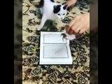Ыйык Куранды баспаган мышык/Кошка не наступает в священную книгу Коран