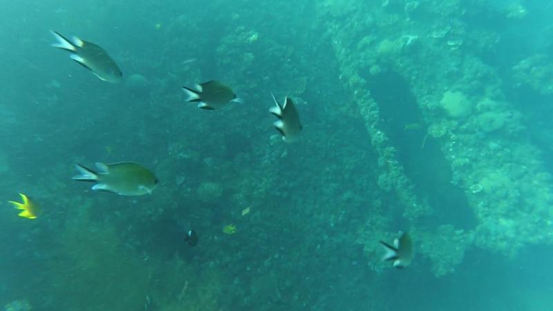Bali, '18, snorkeling