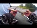 На рыбалке с сыном, щука, окунь и дождьбыли разловленны некоторые воблеры