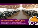 Голышмановский район лидер по производству молока в Тюменской области