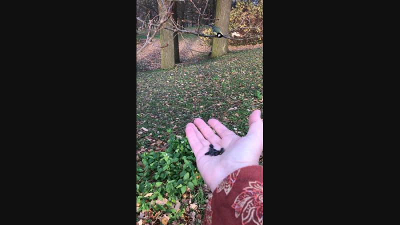 Птицы-синицы в ЦПКиО 23 октября 2018 года