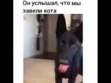 The dog heard that the owners brought a cat