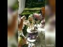 Tortik kem свадебныйторткемерово
