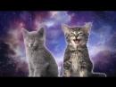 кошки мишки