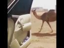 Танец рядом с машиной (VHS Video)