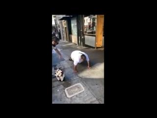 Хабиб и его брат сняли на видео, как бездомные отжимаются за деньги в США NR