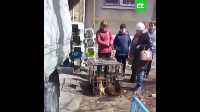 «Собачий концлагерь» ликвидировали в Тюмени