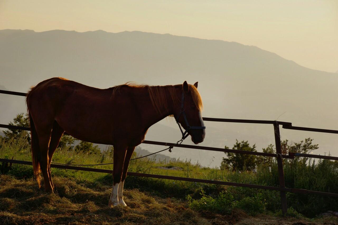 Лошадки горы Ай-Петри.