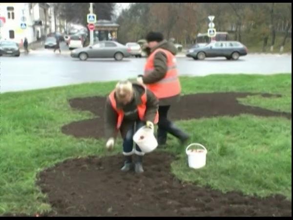 В Ярославле начали высаживать тюльпаны