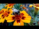 Подглядывала за пчелкой)