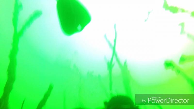 Wood_divers_HD.mp4