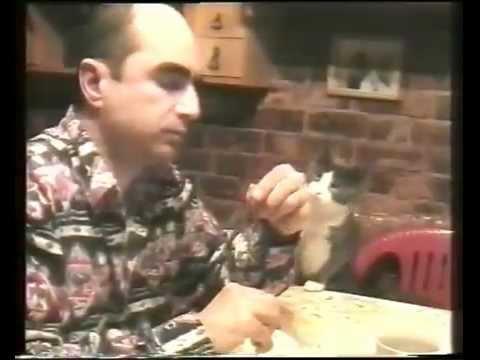 Gato pede comida com linguagem gestual | tabonito.pt