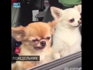 Если бы дни в моей неделе были собаками