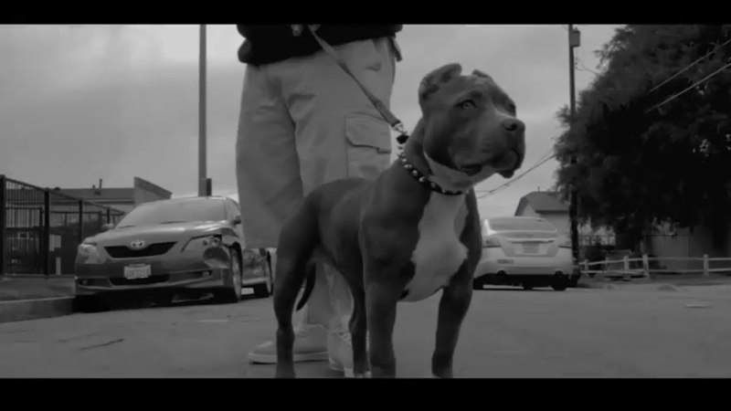 SPANKY LOCO - 1-800-WAS-HATN | (prod by Niles Davis) | (Official Music Video) | [LOCO OG - 2018]