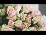 Teaser Florist Dasha Sokolova