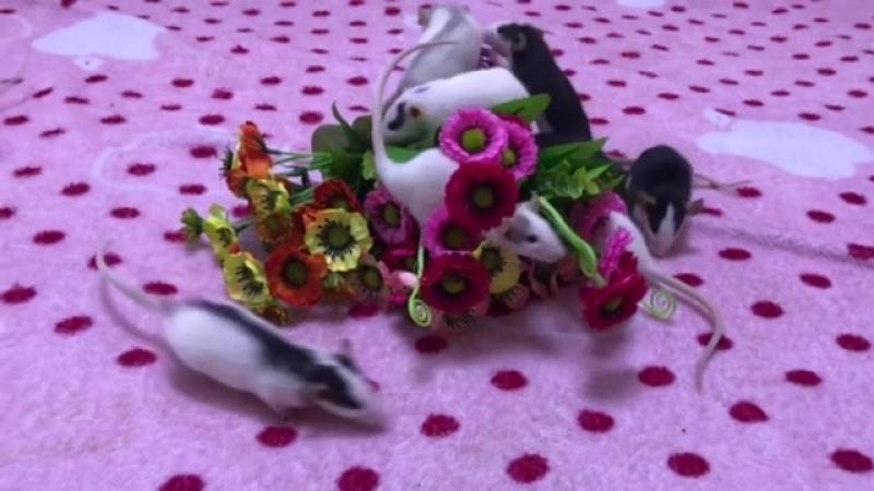 Девочки любят цветы))