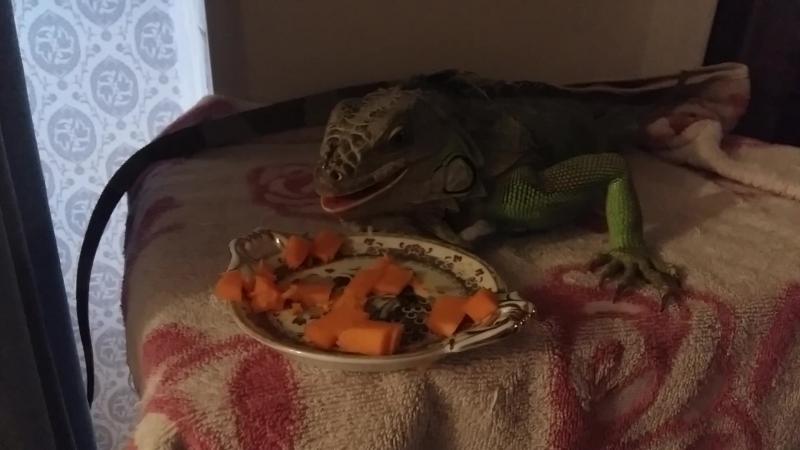 Гекс кушает тыкву, понравилось))
