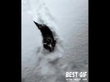 Кот и снег.mp4