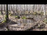 Прогулка по лесу, апрель...