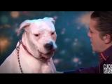 Собачка поёт с Уитни Хьюстон