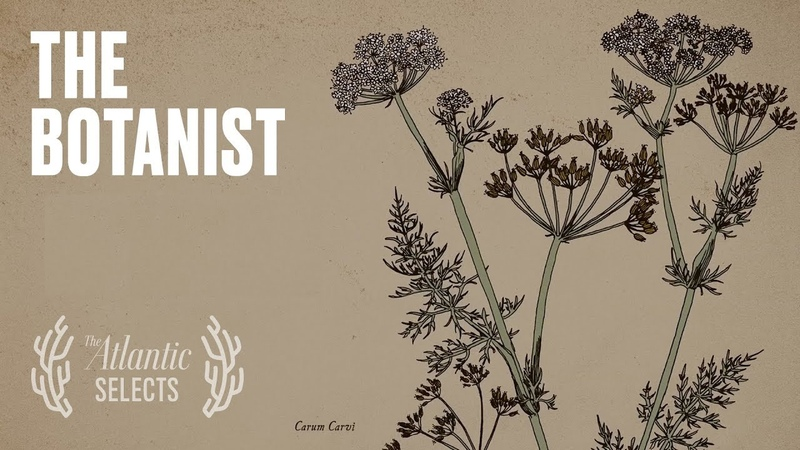 The Ingenious Botanist in the Mountains of Tajikistan