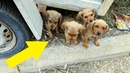 Man Pulls Puppies Out Of The Trash Every Day Only To Uncover An Even Bigger Problem
