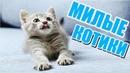 Смешные коты и милые котики.Приколы с котами и кошками 2019