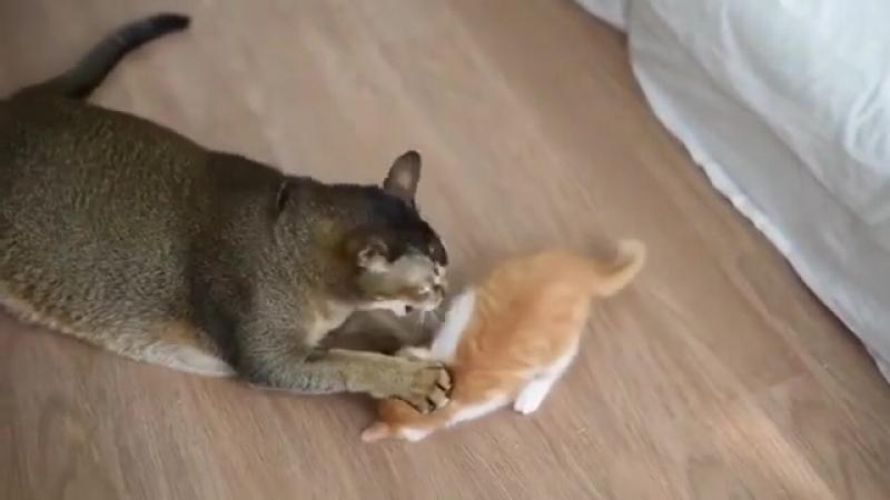 О, проснись, проснись! Стань товарищем моим, Спящий мотылёк!