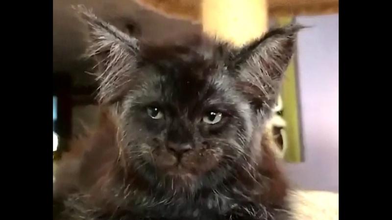 Вот лучший актёр для роли чеширского кота в Алиса в стране чудес мей кун