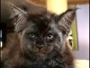 Вот лучший актёр, для роли чеширского кота в Алиса в стране чудес мей кун