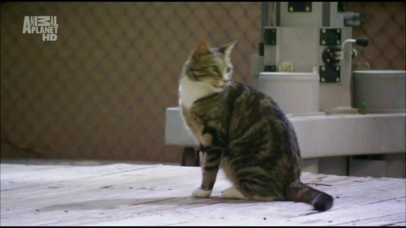 Koshek.ne.lubit.nelzja.(1.sezon.4.seria.iz.6).2010.HDTVRip