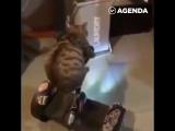 Котик катается на сигвее