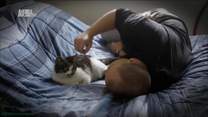 Адская кошка 35 Сумасшедшая Дейзи Реальное ТВ животные фелинология 2013