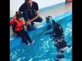 Плавание с дельфинами - это не страшно