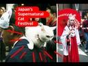 Japan's Supernatural Cat Festival (化け猫フェスティバル)