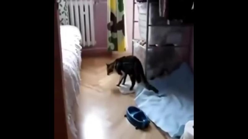 Кот ест коноплю.