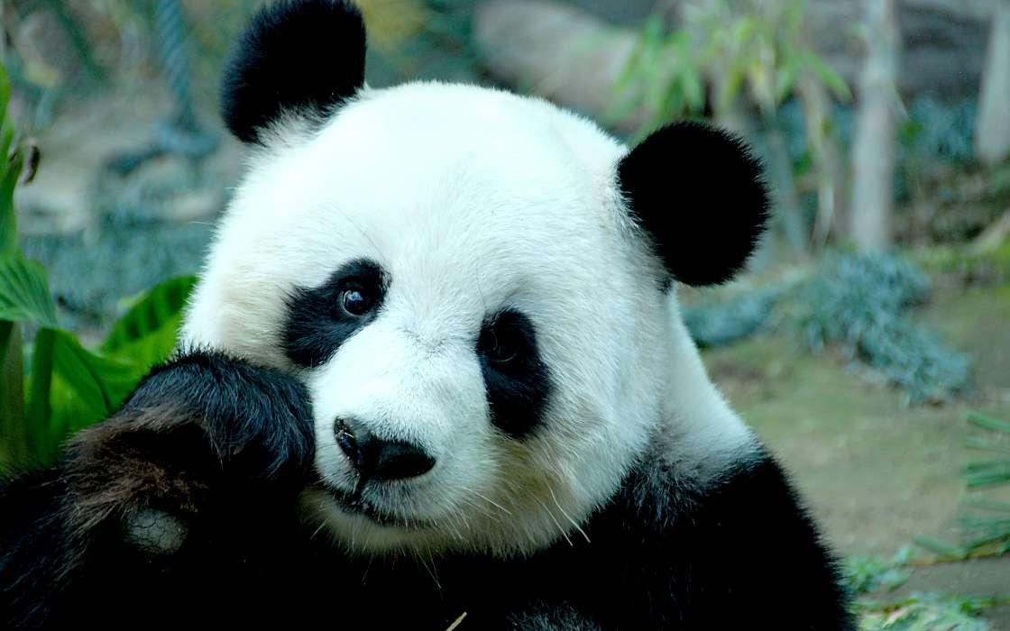 Cygo panda e (tim3bomb remix) (2018) » музонов. Нет! Скачать.