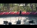 Воронеж 2014: Усаги Хаяши II, концерт на форум-выставке