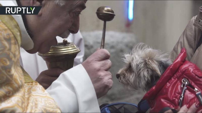 День святого Антония: в Мадриде тысячи домашних животных получили благословение