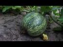 Жнива та інноваційні аграрні технології корпорації «Сварог Вест Груп»