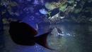 Wasserscheue Fische by © Raymond Hummy ART
