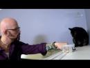 07 Адская кошка