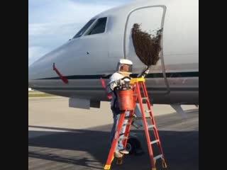 Рой на двери самолёта