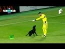 В Грузии, во время матча, собака выбежала прямо на а поле 🐶⚽😀🙃