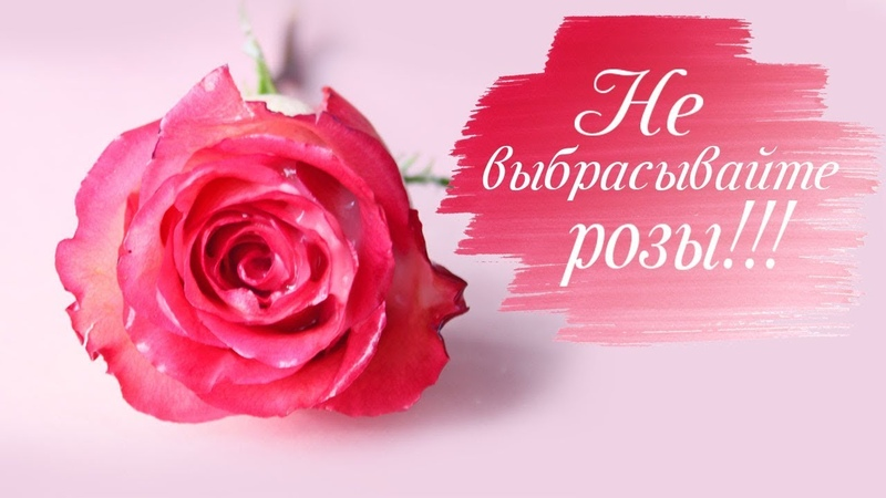 БОЛЬШЕ НЕ НУЖНО ВЫБРАСЫВАТЬ ЦВЕТЫ Как продлить жизнь цветам Розы в воске