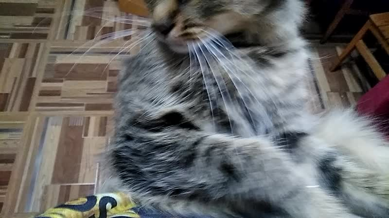 кошка и мания вонючих ног