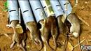 Ловушки для грызунов