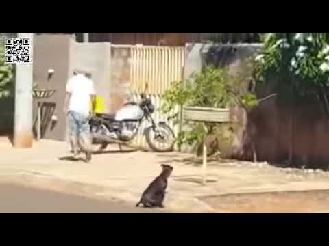 Idoso é flagrado agredindo cachorro a pauladas. AcheiC