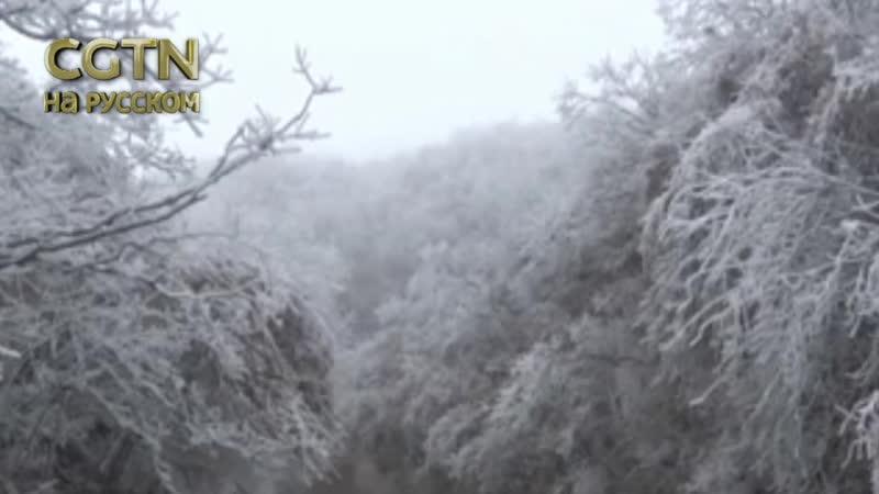 в Национальном парке Чжанцзяцзе (пров. Хунань) покрылось изморозью