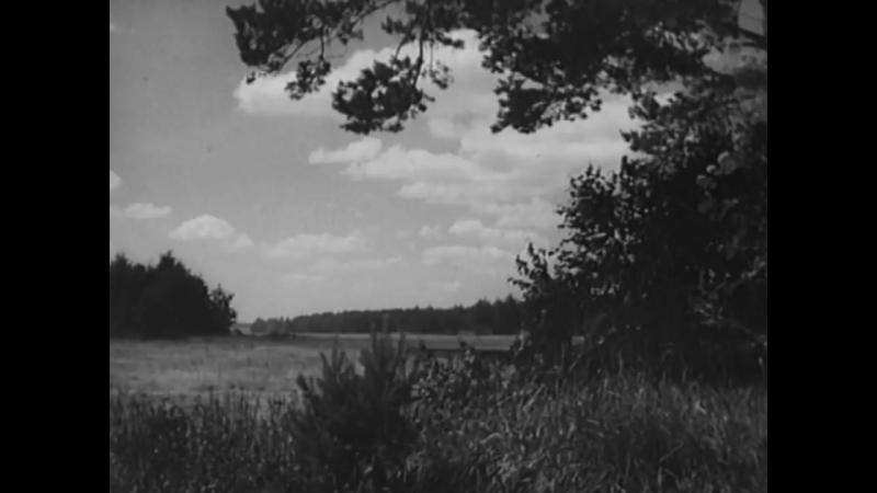 Наше сердце Художественный фильм 1946